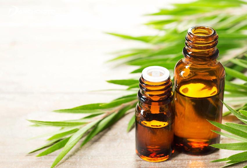 Tinh dầu tràm có khả năng chống viêm, kháng khuẩn rất cao